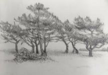 Bomen op Terschelling, potloodschets.